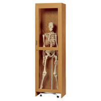 Locking Skeleton Cabinet