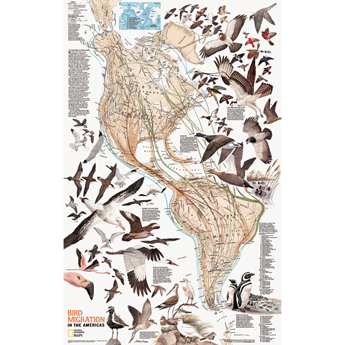 Bird Migration Wall Map