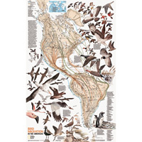 Bird Migration Wall Map
